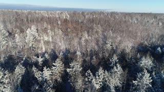 Maine Winter Day