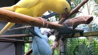 Unusual parrot