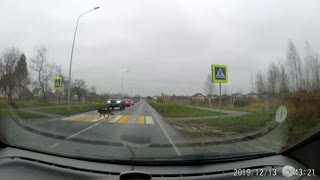 Dog Uses Pedestrian Crossing like a Person