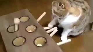❤️ Clueless kitty