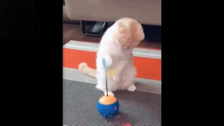 very cute cat playing