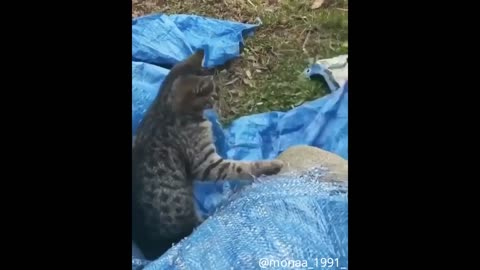 Cute Husky And Cat Get Into An Argument