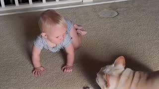 French Bulldog Playing with Baby Sister