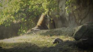 Hyena african carnivore footage zoo animal wildlife