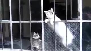 Mom's Cat Saves Her Child