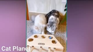 Cat playing with a toy part 3