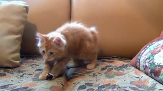 Cute cat playing with mouse toy