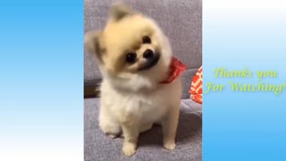 Cute and Funny Pets..Just watch and share