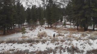 Winter Walk at Mount Charleston
