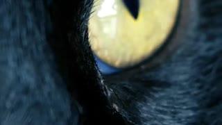 cute black cat makes you laugh!
