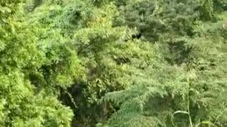 Un bus intermunicipal cayó a un abismo en la vía Bucaramanga - San Alberto