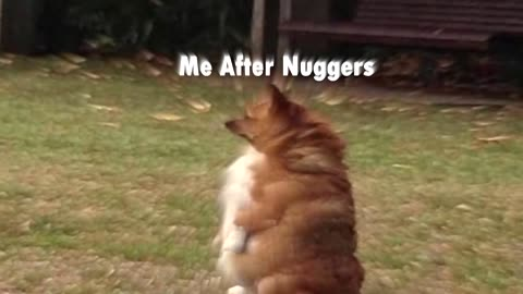 Me before and after nuggers