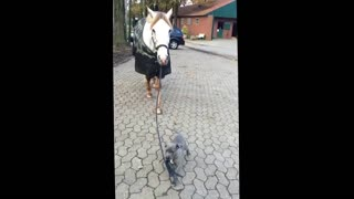 Baby dog walking with horses 2021