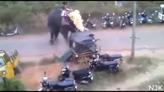 Elephant attack in KREALA