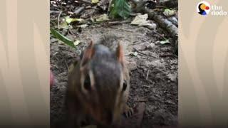 Guy's Best Friends With 14 Wild Chipmunks