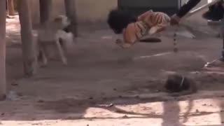Funny video| Trolling a dog
