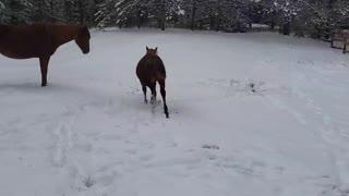 Snow!! Horses enjoying our first snowfall