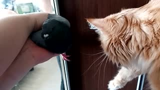 The cat first saw a pigeon live