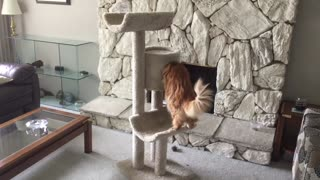 Huge kitty can't fit in new treehouse
