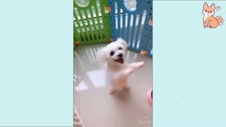 Dancing dog happy dog clever dog