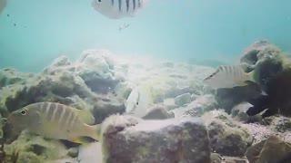 Under the Sea - Jamaica 2020