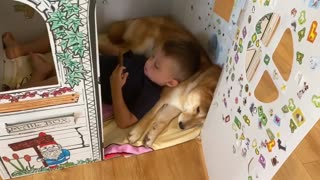Little boy uses his Shiba Inu best friend as his own personal pillow