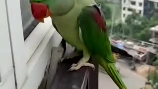 back home after party / parrot funny