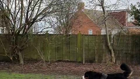 Large dog trying to be friends with squirrel