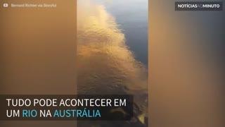 Tubarão surpreende e aparece em rio na Austrália
