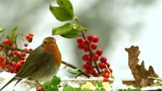 a beautiful bird on the trees
