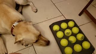Dog finding treats