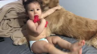 Baby and dog fighting for a bone