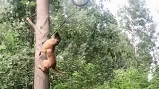dogs talent