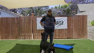 DOG TRAINING FUNDAMENTALS: EPISODE 4