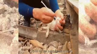 Rescue the poor kitten after the train accident