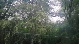 Relax Library: Video 13. Windy day in the forest . Relaxing videos and sounds