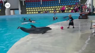 Adorable Toddler Plays Fetch With Playful Dolphin