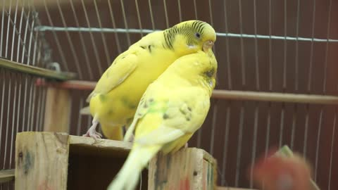 Love and birds