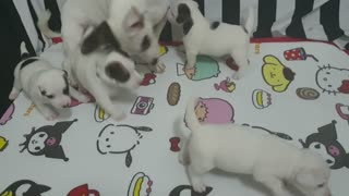 puppies _ parents