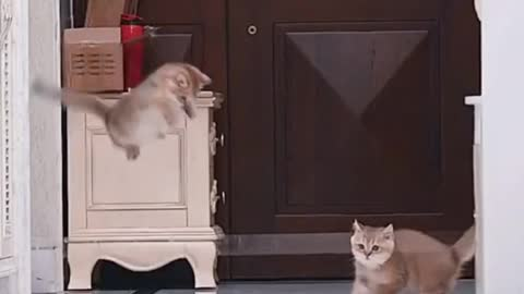 Daily cat video - 14