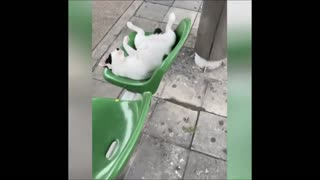 Cute and Funny Animal Videos Compilation