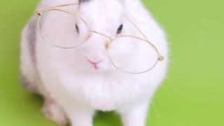 Rabbit read book