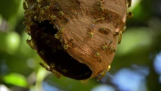 bees colony