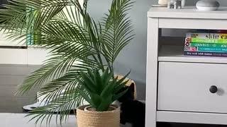 Naughty 8 week old kitten