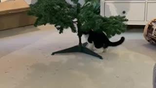Kitten vs Christmas tree