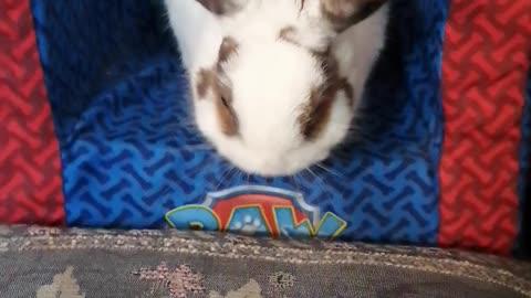 Chuck Bunny...37
