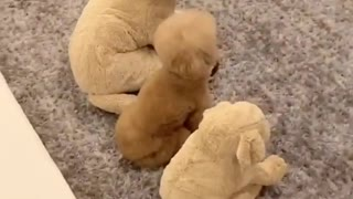 Dogs funny watching tv