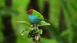Nature ave bird garden _