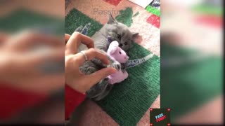 Baby Cats - Cute and Funny Cat Videos Compilation -passfunny