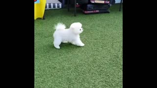 cute dogs playing with each other and there owner